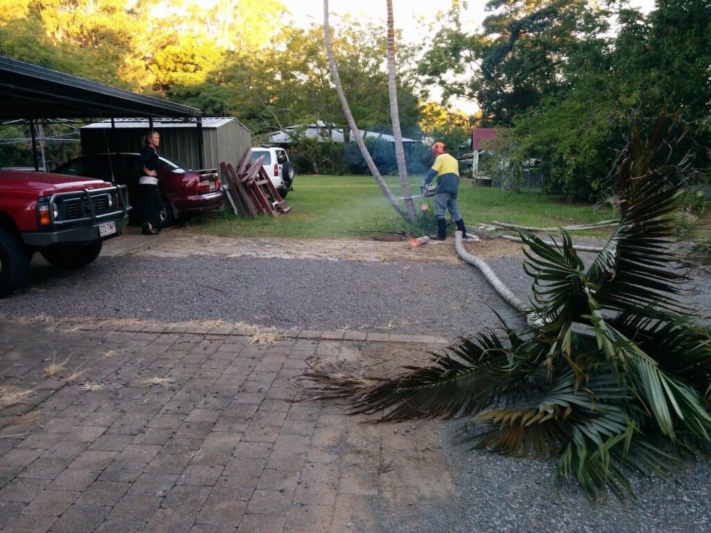 Removing Palm Tree