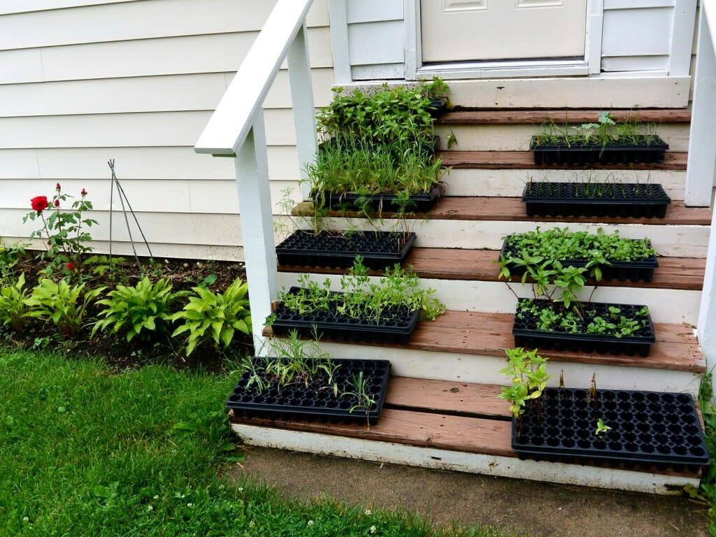 grown your own seedlings