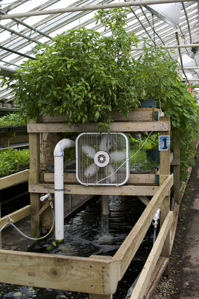 Hydroponic tank systems Photo 01 by Chris Kirby