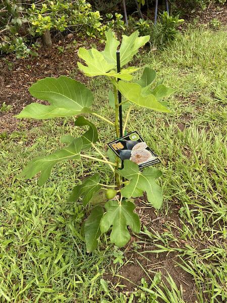 Fruit Trees 2019 IMG 6861