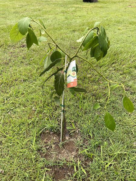 Fruit Trees 2019 IMG 6863